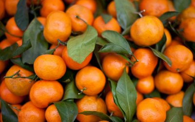 Gratinée de mandarine et cubes de citrouille de Mauro Colagreco