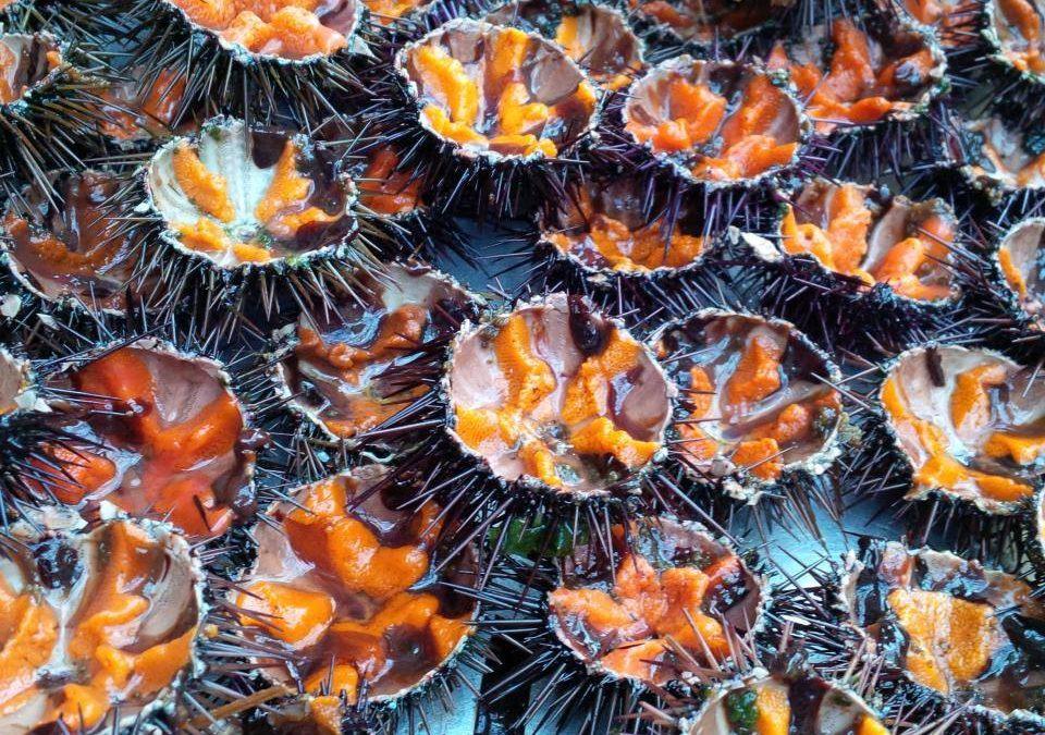 Noël 2020 ♥ Les poissons et fruits de mer de La Boîte à Sardine (Marseille)